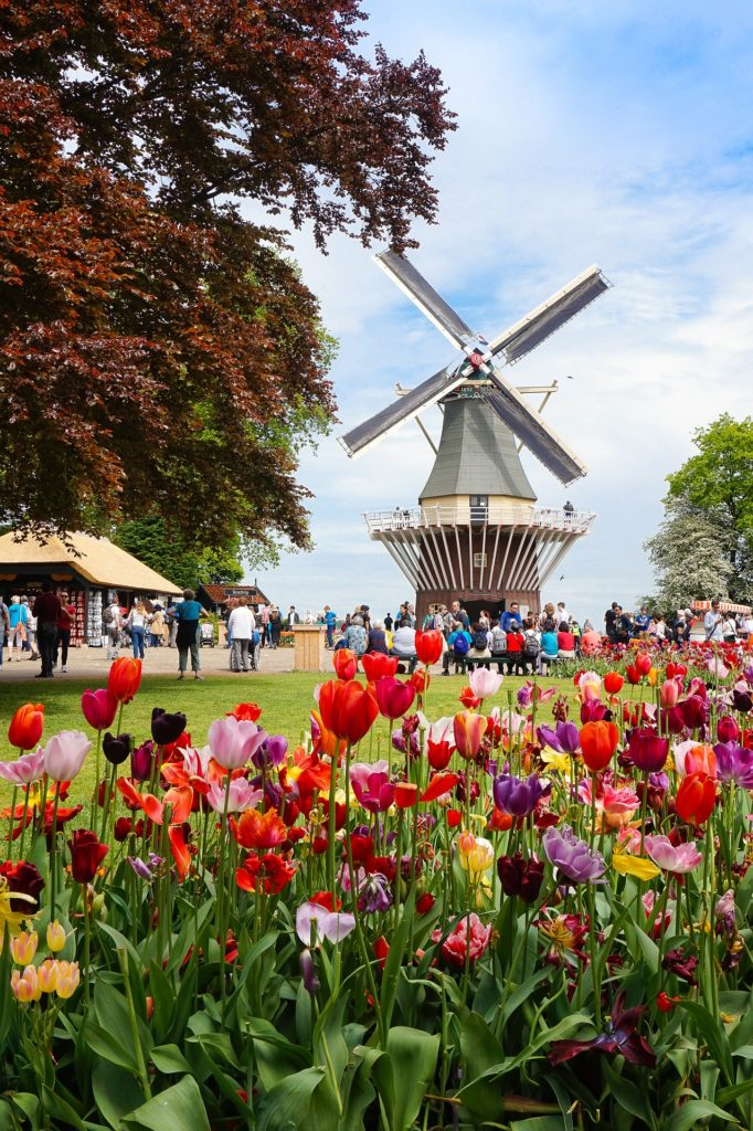 See The Windmills At Amsterdam