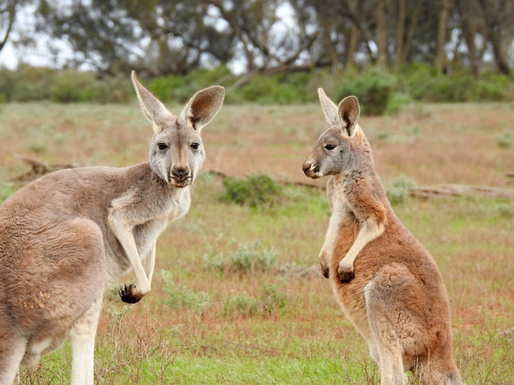 Australia Travel Guide: The Best Way to Get to Know Australia 🦘