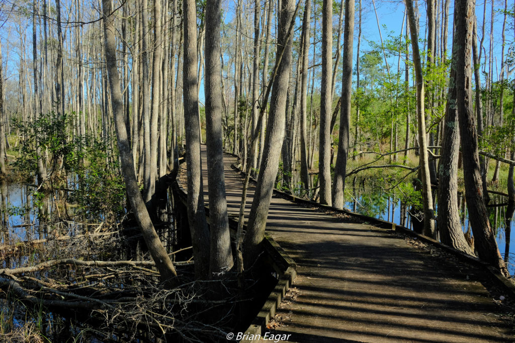 Okefenokee at Stephen C Foster State Park